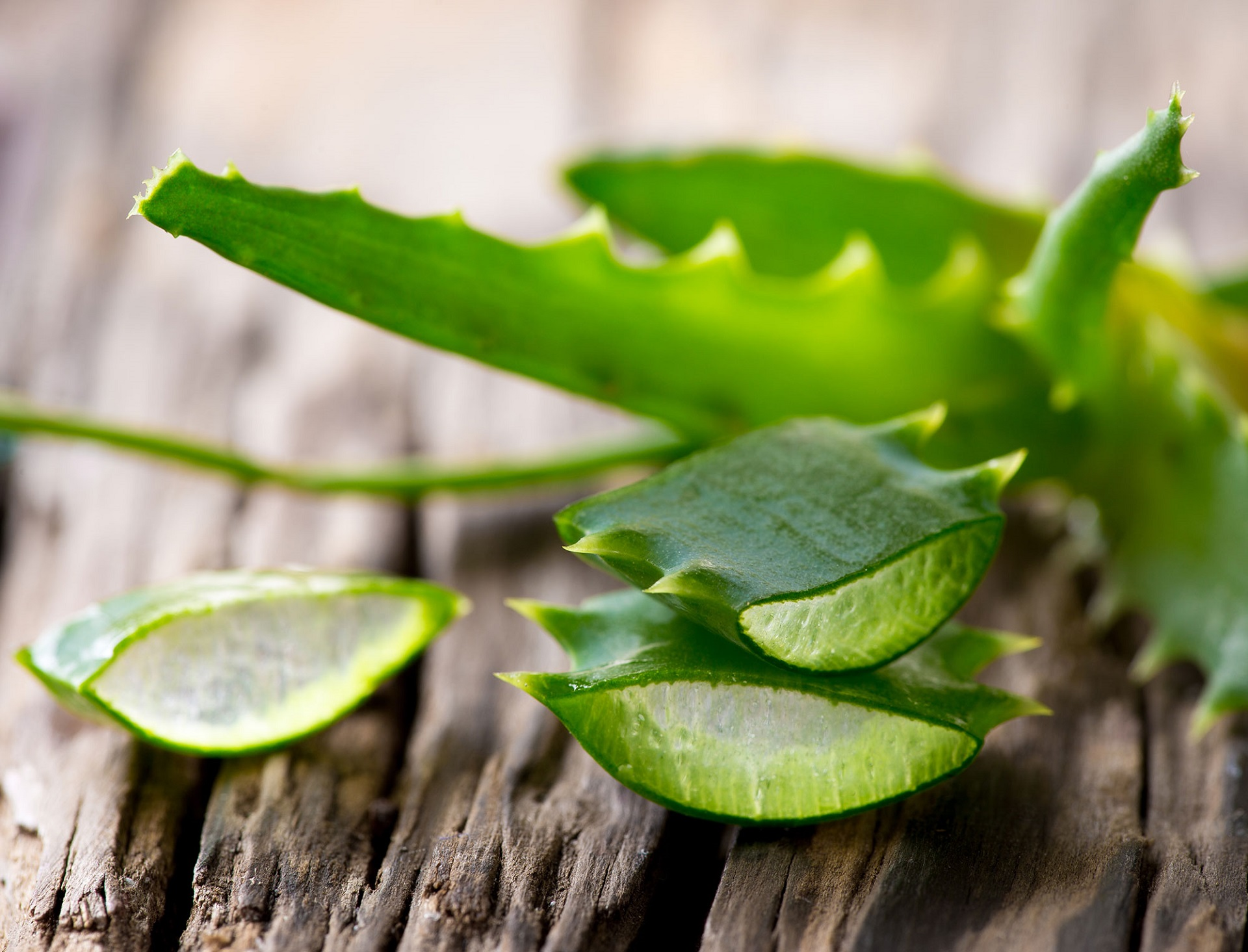 Aloe Vera leaves on wooden background