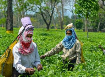 BJP govt hikes daily wages of tea garden workers in Assam