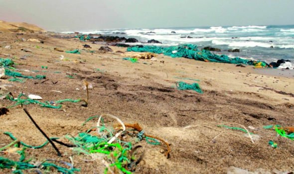 Plastic has washed up on beaches