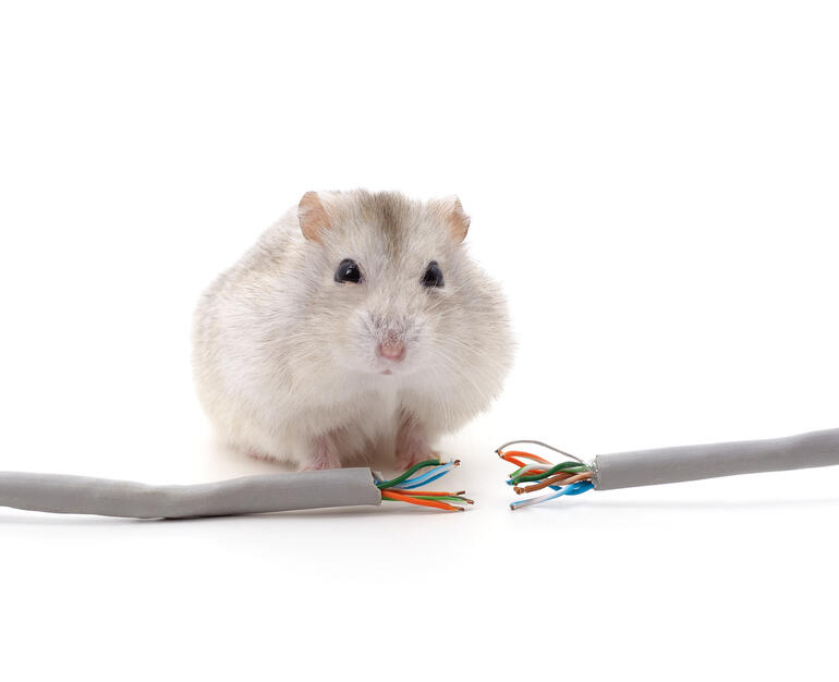 Hamster chewed network cables